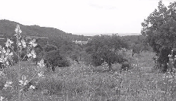 A View of the majorcan countryside