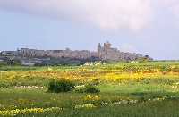 Mdina and Fields